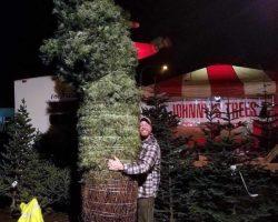 Johnny's Trees